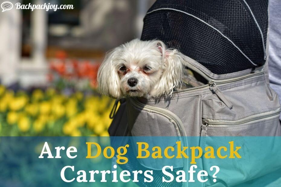 Are Dog Backpack Carriers Safe and secure