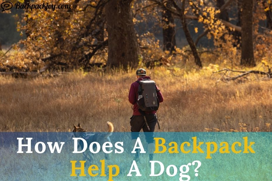 How Does A Backpack Help A Dog